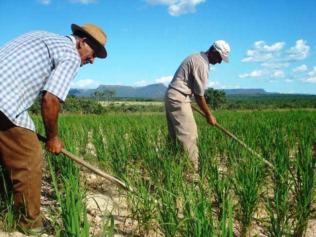 Agricultura familiar ganha apoio do governo durante crise do Covid-19 (Reprodução/Internet)