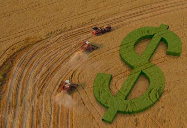 Contratação de crédito rural cresce! Veja como essa pode ser uma boa solução