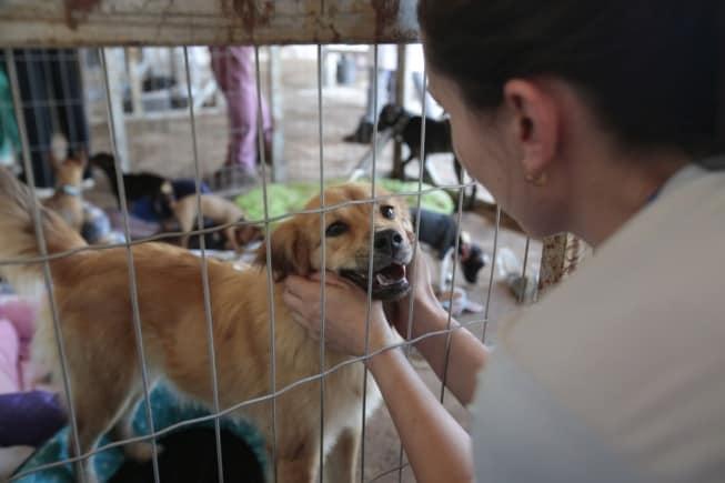 IPTU 2020 em cidade paranaense pode ser reduzido em 50% com adoação de cães de rua (Reprodução/Agência Brasil)
