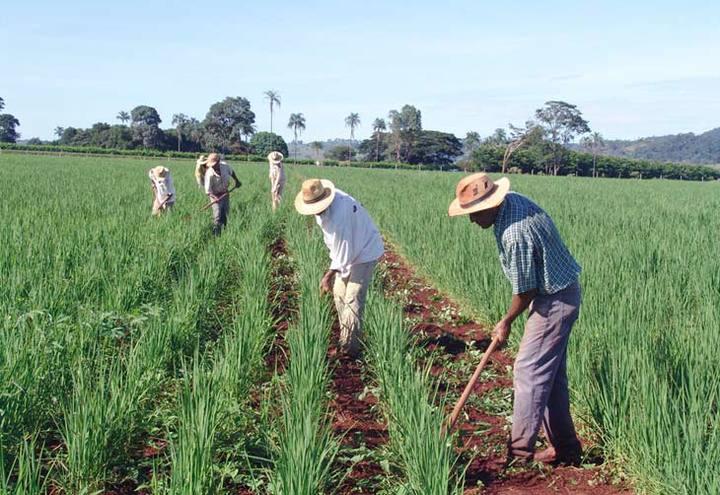 Crédito Rural foi aprovado no Senado e aguarda resposta de Bolsonaro (Imagem: Reprodução - Google)
