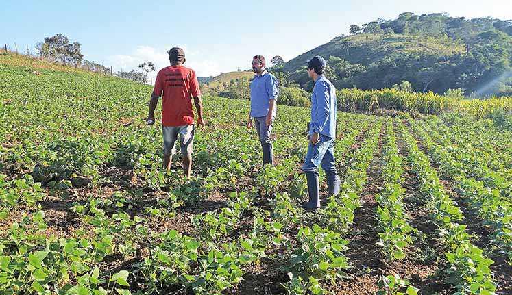 Reforma da assistência rural de SP: O que o texto propõem? E porquê isso preocupa os agricultores? (Imagem: Google)