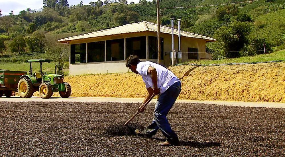 Funcafé será adiantado como forma de assistenciar os produtores