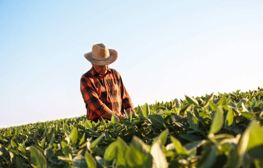Aposentadoria rural do INSS: Lista com requisitos para ter direito ao pagamento