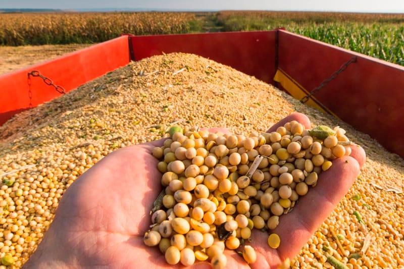 Taxa de importação do óleo, milho e soja ficam suspensas; o que muda nas compras? (imagem: amazonas atual)