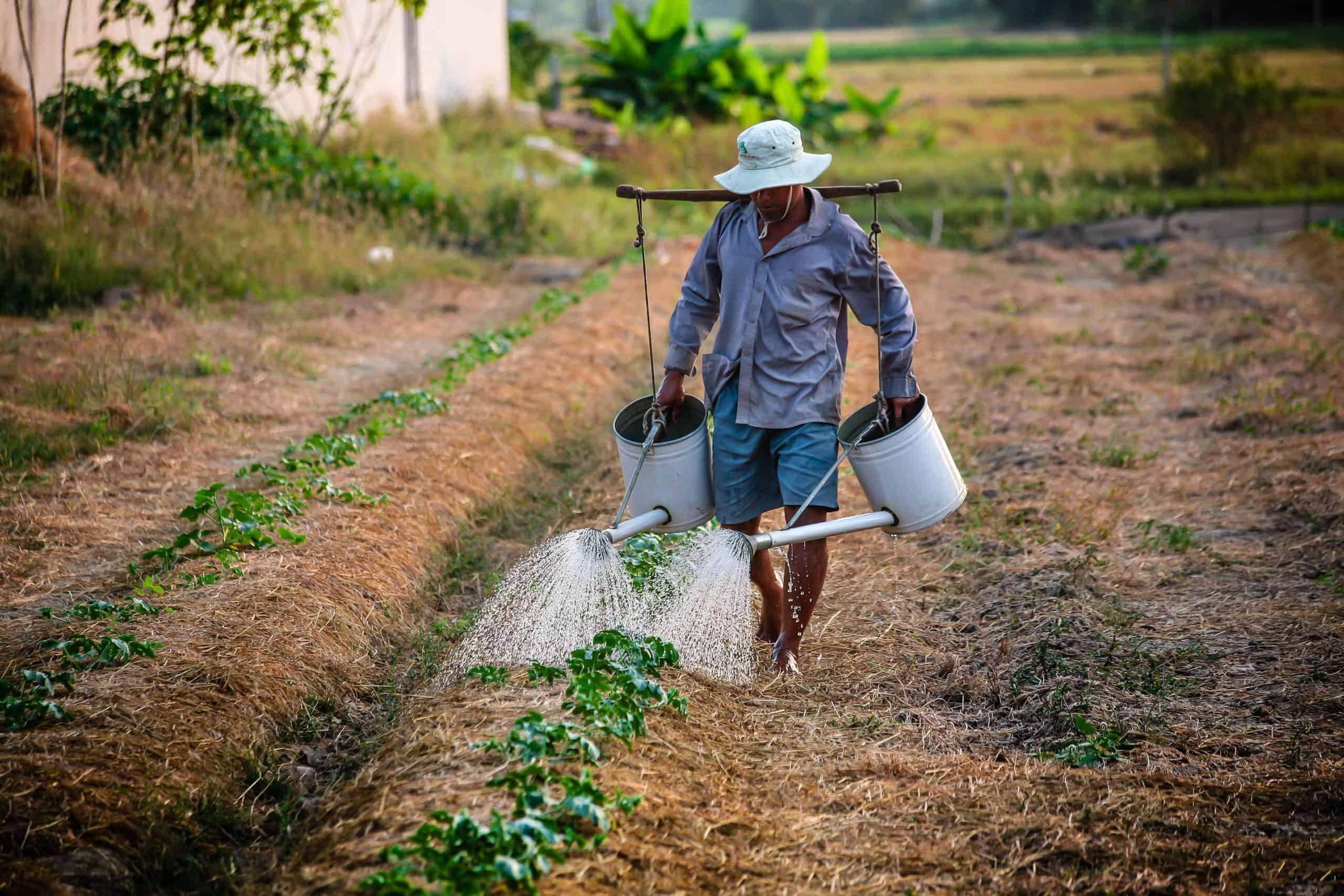 Senado aprova pagamento de R$ 2,5 mil no auxílio ao agricultor