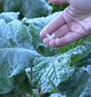 Após luz e combustível, tempo frio e seco devem elevar inflação e alimentos