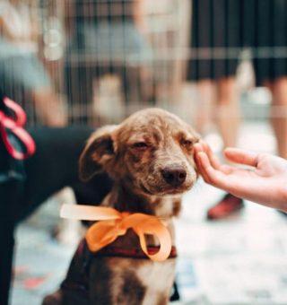 Cidade de MG quer dar 20% de desconto no IPTU de quem adotar animais abandonados