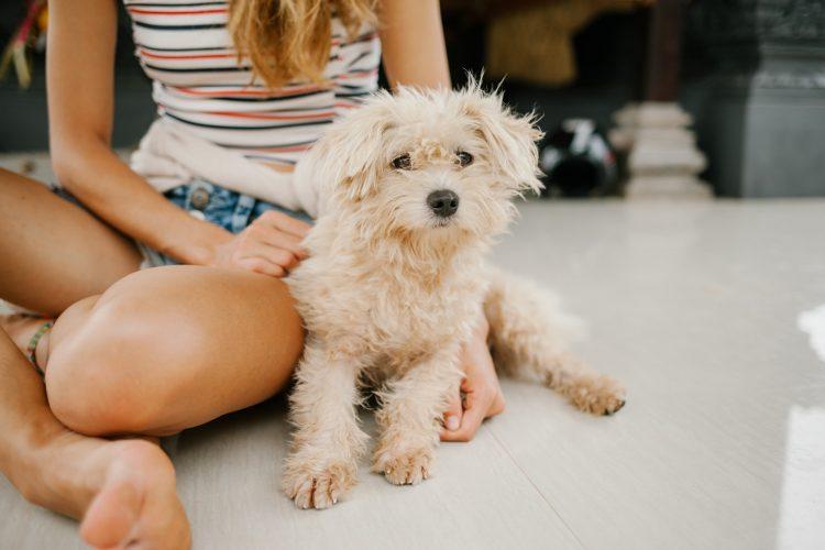 Vereadores analisam desconto no IPTU para quem adotar cães em cidade de SP